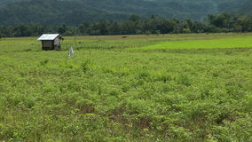 Farmland in philippines stock video