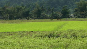 Farmland in philippines stock footage