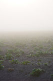 Farmland with potato during a foggy sunrise Royalty Free Stock Image