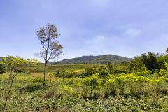 Farmland and Rice Fields stock photo