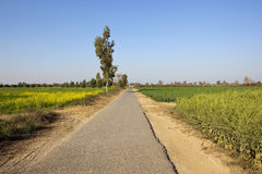 Farmland road in rajasthan. A small rural road through the farming landscape of rajasthan in north india Royalty Free Stock Photography