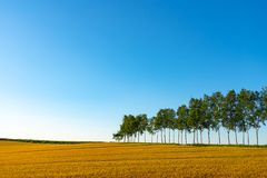 Farmland, Row of Trees on hill with blue sky background in sunny day. Nature Landscape royalty free stock image