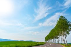 Farmland, Row of Trees on hill with blue sky background in sunny day. Nature Landscape stock photo