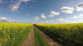 Farmland rural road and beautiful blossoming rapeseed field panorama. Timelapse 4K stock video footage