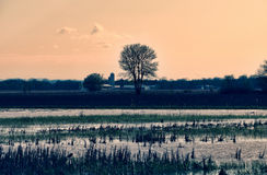 Farmland scene nearing sunset. Farmland with tree and rain water in foreground stock photos
