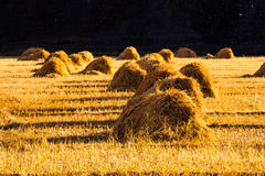 Haystack in farmland in Shigatese Stock Photography