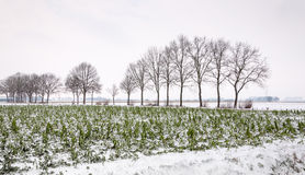 Farmland in the snow Royalty Free Stock Photography