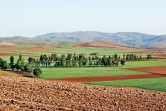 Farmland in spring. View of a fertile farmland in highlands with a line of trees stock images