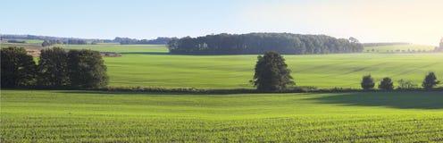Farmland in springtime. Farmland panorama in springtime. Room for text, icon landscape Stock Photo