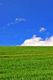 Farmland at springtime Royalty Free Stock Photo