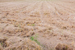 Farmland with straw and stubble Royalty Free Stock Images