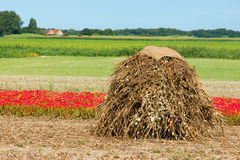 Farmland in the summer. Farmland with a stack of dried poppies Royalty Free Stock Photos