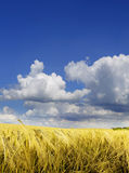 The farmland Stock Photos