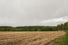 Farmland surrounded by forest trees Royalty Free Stock Image