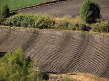 Farmland texture. Royalty Free Stock Photo