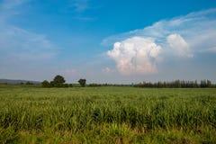 Farmland Stock Images