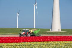 Farmland with tractor planting potatoes between tulip fields and windturbines Royalty Free Stock Photos