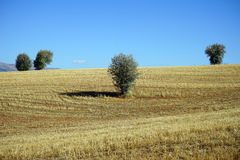 Farmland Royalty Free Stock Images