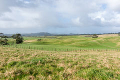 Farmland and trough Te Kopuru Northland Royalty Free Stock Image