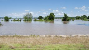 Farmland under water during spring flooding, Arkansas River. Trees are in standing water in the field during spring flooding. Muddy  water covering cropland royalty free stock photography