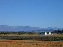 Farmland vinyard. Landscape image of Western Cape farmland and vineyard royalty free stock photos