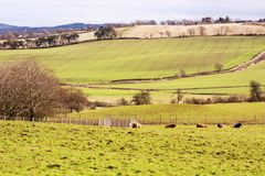 Farmland in West Lothian, Scotland, United Kingdom. In spring Stock Image