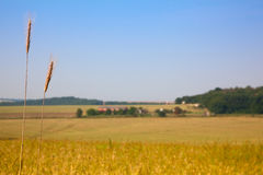 Farmland and wheat Stock Images