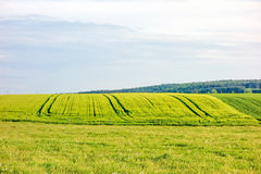 Farmland - wheat field Royalty Free Stock Photo