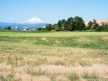 Mount Hood in Oregon state, USA. Farmlands in Dufur, Oregon state, with Mount Hood at the background royalty free stock images
