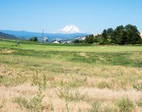 Mount Hood in Oregon state, USA. Farmlands in Dufur, Oregon state, with Mount Hood at the background stock image