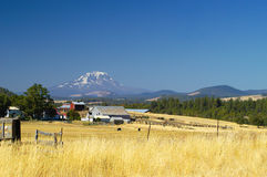 Farmlands, Goldendale, WA Stock Images