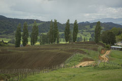 Farmlands. New Zealand Stock Photo