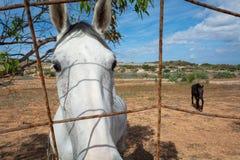 Farmlife y caballos durante un pasto fotografía de archivo