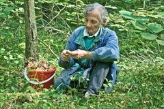 Farmor med champinjoner Royaltyfria Bilder
