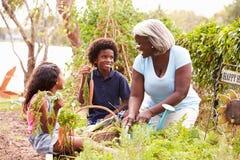 Farmor och barnbarn som arbetar på odlingslott Royaltyfri Bild