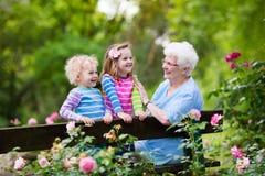 Farmor och ungar som sitter i rosträdgård Arkivbild
