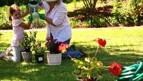 Farmor som arbeta i trädgården med hennes sondotter stock video