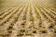 farms zdjęcie stock