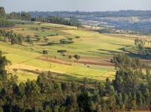 Farms of Ethiopia. Patchwork of farmland in Oromia, Ethiopia Royalty Free Stock Photography