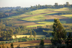 Farms in Ethiopia. Patchwork of farms and forest in rural Ethiopia Stock Photos