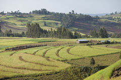 Farms in Ethiopian highlands Stock Image
