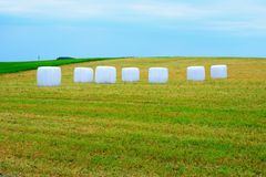 At the farms in Kupiskis district. The Lithuania. At the farms in Kupiskis district. The grass in plastic Stock Image