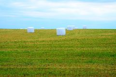 At the farms in Kupiskis district. The Lithuania. At the farms in Kupiskis district. The grass in plastic Royalty Free Stock Photography