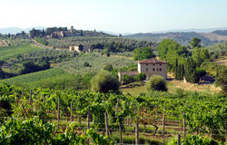 Farms in Tuscany, Italy. Farms with wine grapes and olives, in Tuscany (Toscana), Italy Royalty Free Stock Photos