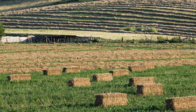 Farmscape with hay bales in field Stock Images