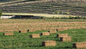 Farmscape mit Heuballen auf dem Gebiet Stockbilder