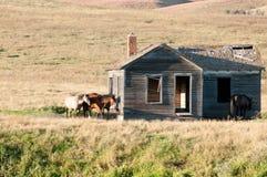 Farmsight abandonado velho Fotos de Stock Royalty Free