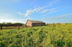 Farmstead Abandoned and Forgotten. An old farmstead (barn) on the prairie is still the home of cattle, pasture, and a feedlot Royalty Free Stock Photo