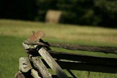 farmy antique motyki stare narzędzia obrazy royalty free