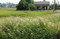 farmy do obszarów wiejskich Fotografia Royalty Free